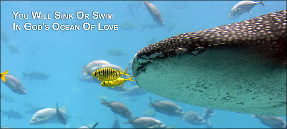 Swimming lessons in God's ocean of love - David J. Abbott M.D.
